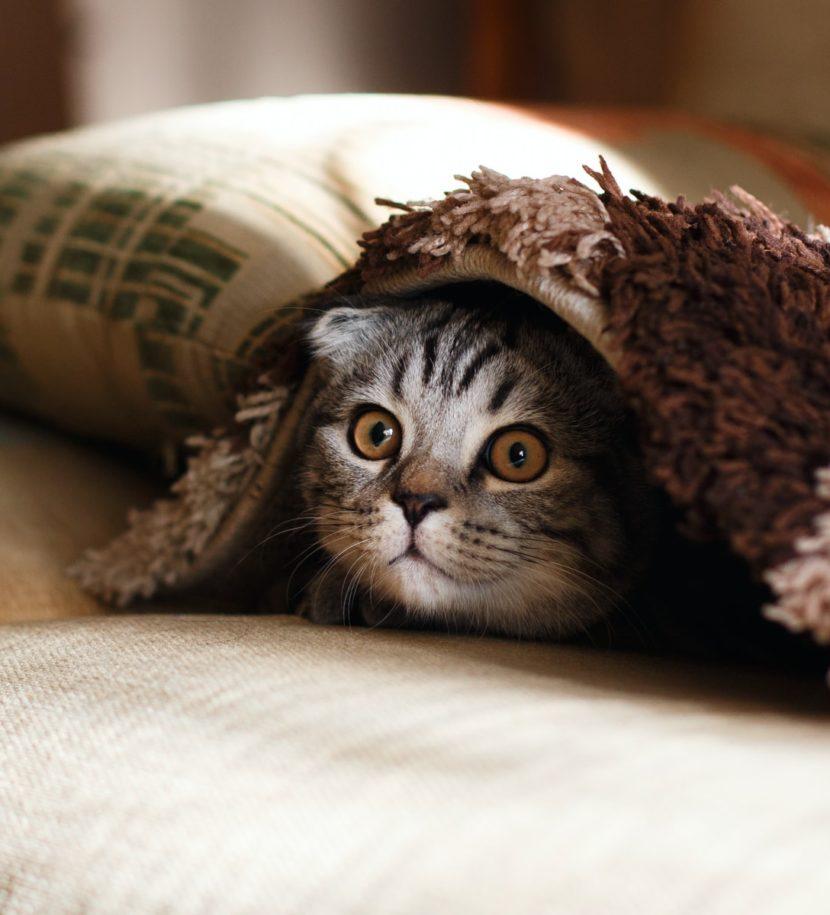 Katze versteckt sich unter Decke