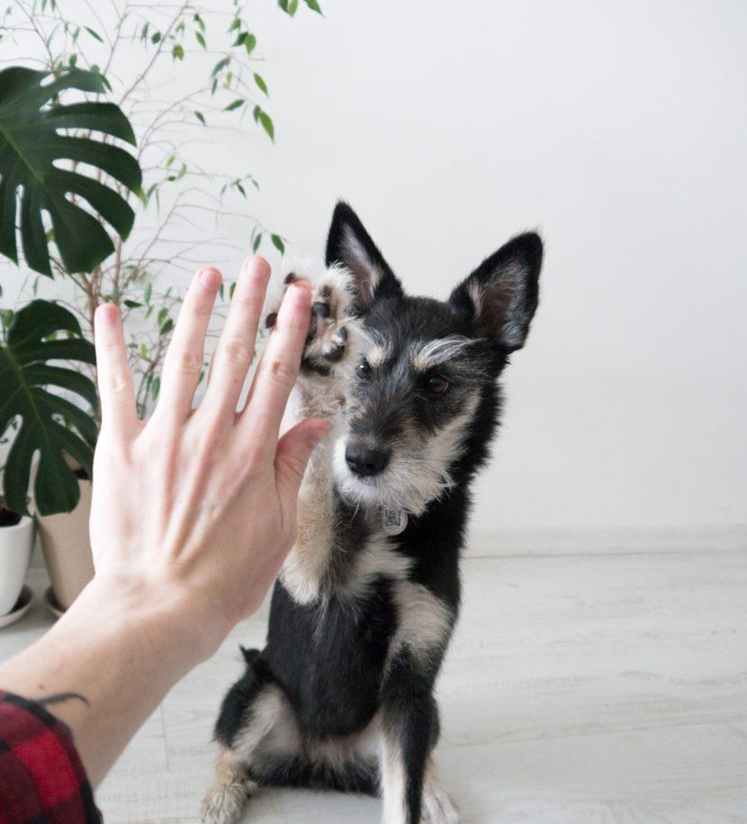 High five mit Hund