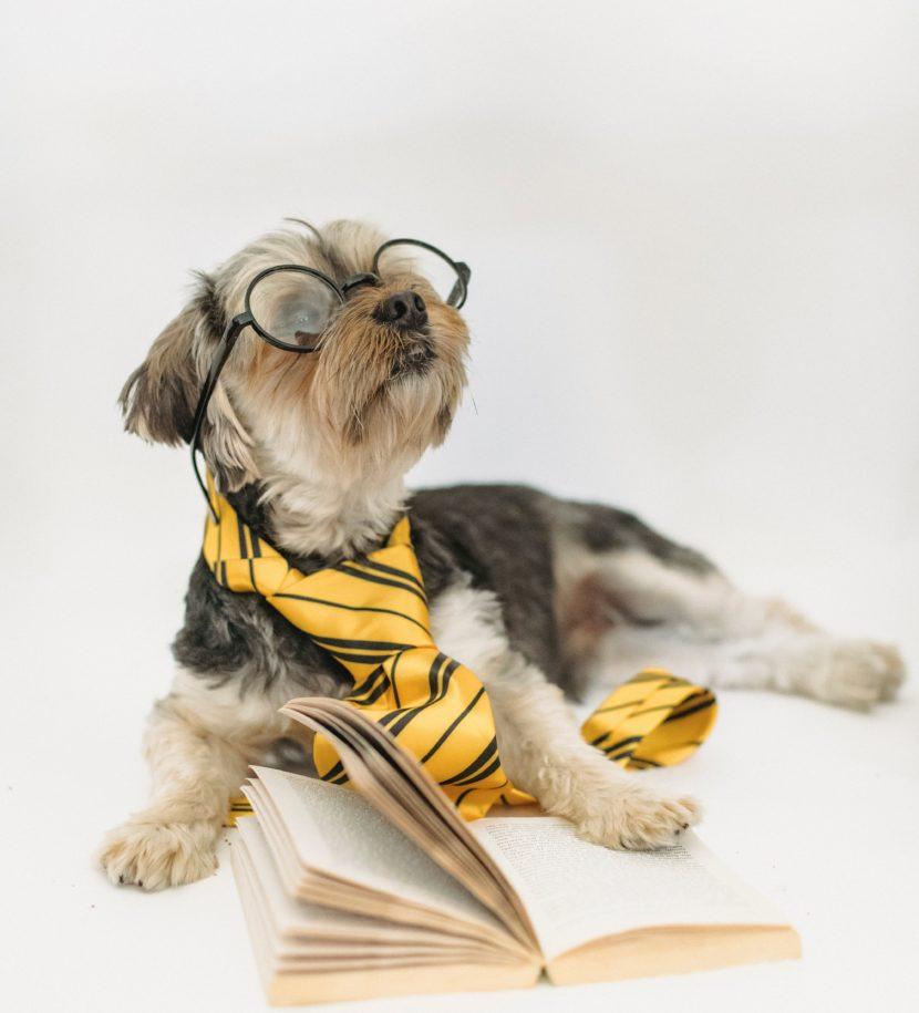 Hund mit Brille und Buch